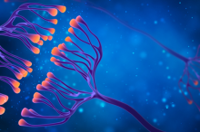 Graphic image depicting synapses in the brain, showing their branches in purple with lit-up orange tips on a blue background.