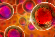 Graphic image of stem cells with nuclei in red on an orange background.